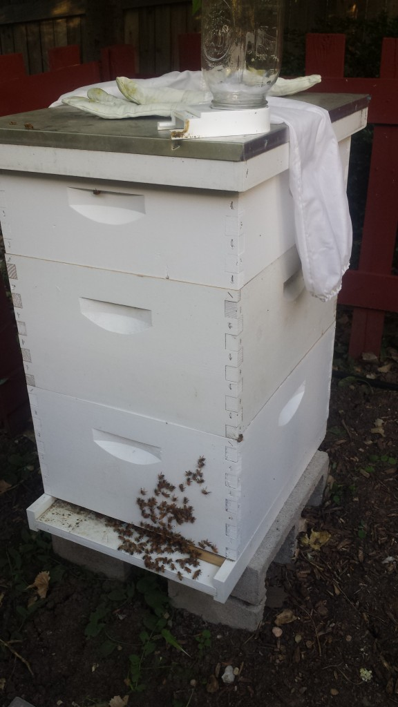 Left the equipment there for the bees to clean off the honey